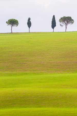 pienza: Val dOrcia, March 2016: Landscape with hill, house and cypress, on March 2016 in Val dOrcia, Tuscany, Italy