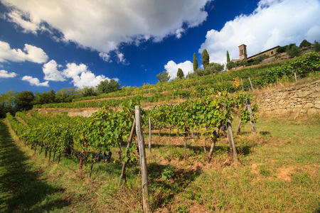 Chianti vineyard landscape in autumn with church, cypresses, clouds  and grapes, Tuscany, Italy Editorial