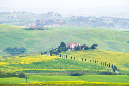 Val dOrcia, April 2018: Tuscan landscape with hill, house, cypress and yellow blossom in spring, on April 2018 in Val dOrcia, Siena, Tuscany, Italy Editorial