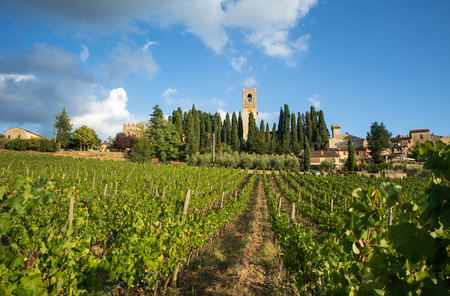 Tuscan vineyard landscape with characteristic abbey in the background, on September 2018 in Chianti, Tuscany, Italy Stockfoto - 117309577