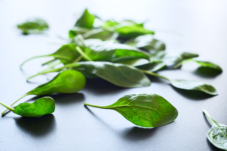 Fresh green spinach leaves on a gray background, close up