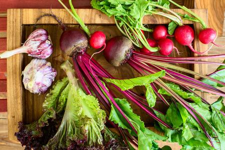 colorfull: harvest: beet, lettuce, garden radish, garlic on a wooden tray. Colorfull, horizontal Stock Photo