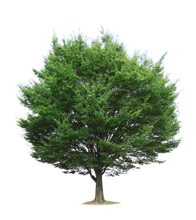 tall tree: tree