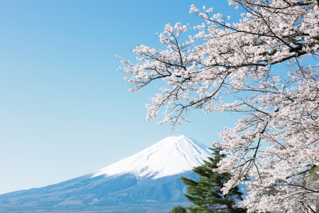 japan sky: Mt  Fuji with cherry blossom