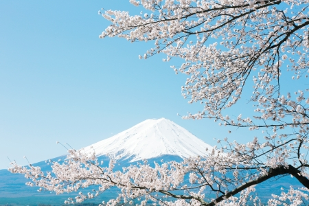 Mt Fuji met kersenbloesem Stockfoto