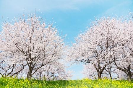 Japanse voorjaar Scenics Stockfoto