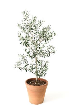olive isolated on white photo