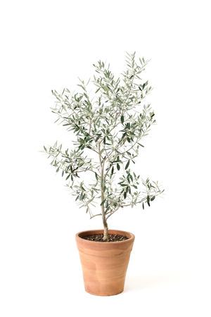olive photo