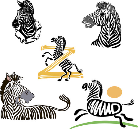 Collection of hand drawn African zebras. Illustration