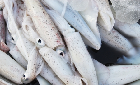 Close up of Squid in rural market photo