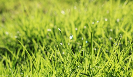 water drop on green grass Stock Photo