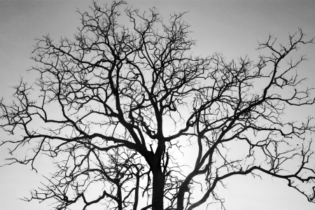 Dead tree branch, black and white  Stock Photo
