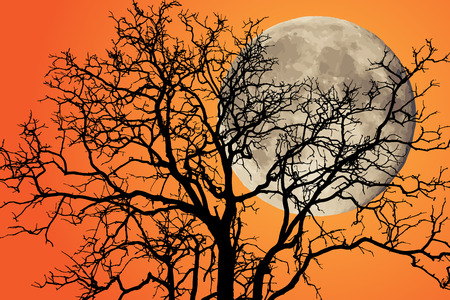 black shadow: Tree branch in black shadow silhouette.,Full moon and tree background