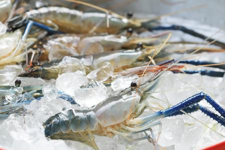 Raw giant freshwater prawn, Fresh shrimp  on Ice. photo