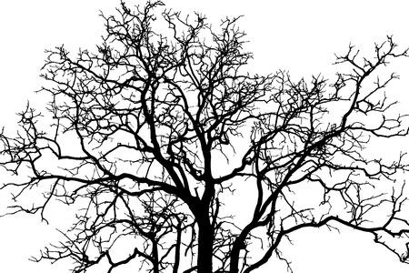 boomtak zwarte schaduw Stock Illustratie