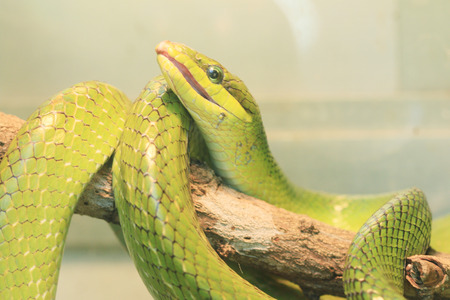 Green snake on branch, rain forest, Thailand