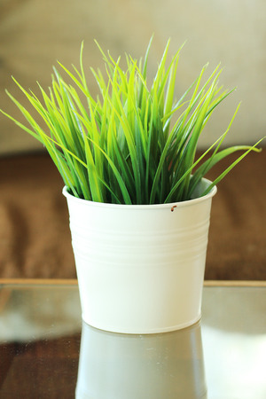 catnip: Close up Green grass leaves in flowerpot, room backgtround.