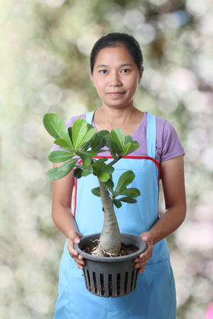 impala lily: Woman with Desert Rose or Impala Lily,Garden center business concept.