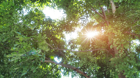 glimmering: Sun ray glimmering through tree leaves Stock Photo