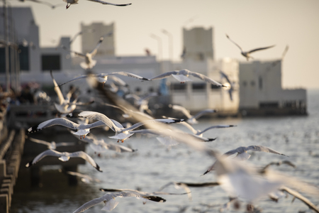 Many seagulls fly happily.