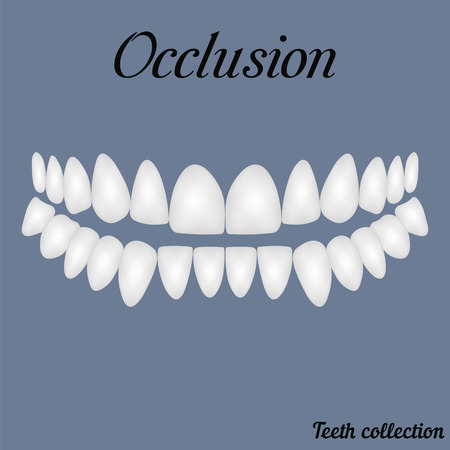 occlusion - bite, closure of teeth - incisor, canine, premolar, molar upper and lower jaw. illustration for print or design of the dental clinic