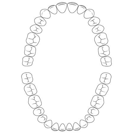 Establecer fisuras dientes, la superficie de masticación de los dientes de la mandíbula superior e inferior, ilustración vectorial dental para la impresión o diseño de plantilla de sitio web dental