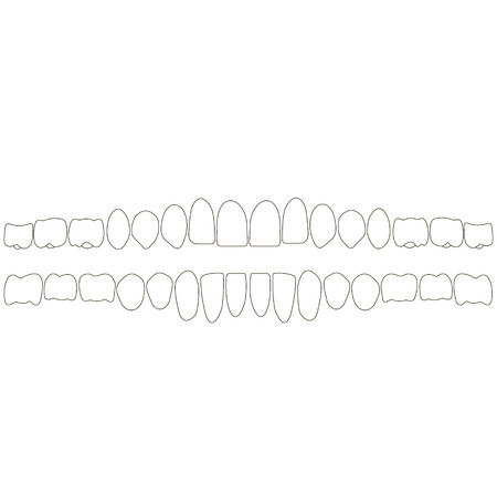 human teeth isometric vector icons set. Dental implant vector flat isometric illustration, Human tooth isolated on white. Vettoriali