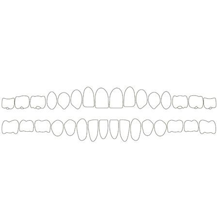 menschliche Zähne isometrische Vektor-Icons gesetzt. Zahnimplantat Vektor flach isometrische Darstellung, Menschlicher Zahn isoliert auf weiß.