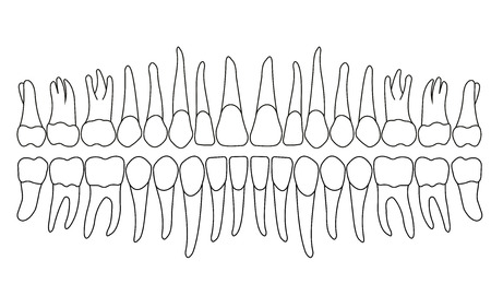 dentición en blanco