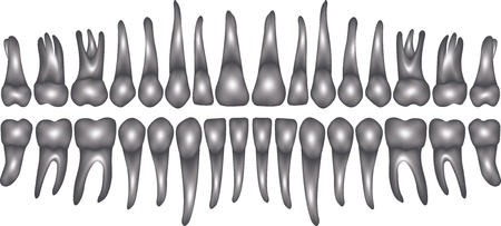 3d dentition on white in vector Illustration