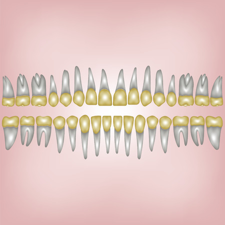 3D a number of gold dental crowns with the roots for a dental clinic or lab, vector on white Archivio Fotografico