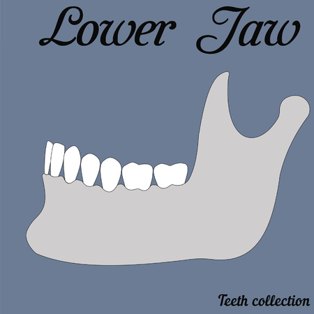 lower teeth: lower jaw, mandible, bottom jaw with tooth, teeth collection, vector