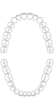 tooth chart teeth, the chewing side of the teeth of man , chart for dental clinic, vector template dentist