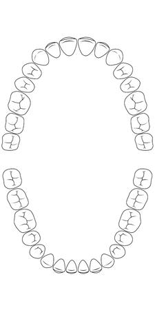 ząb zęba, strona żucia zębów człowieka, wykres dla kliniki stomatologicznej, szablon wektora dentysty