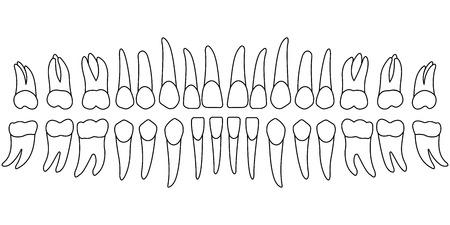 dent de diagramme de dents, le côté avant des dents d'une personne, carte pour la clinique dentaire, dentiste de modèle de vecteur