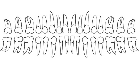 mapa zębów zębów, przednia strona osoby zębów, wykres dla kliniki dentystycznej, szablon wektor dentysta
