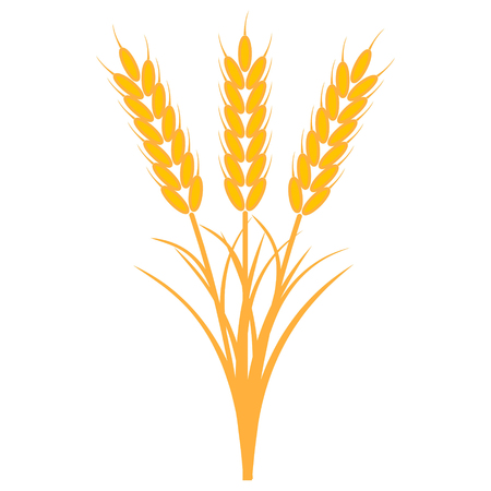 Bouquet bunch of ears of wheat with the stems and leaves of ripe yellow color, a vector the concept of the harvest of crops.