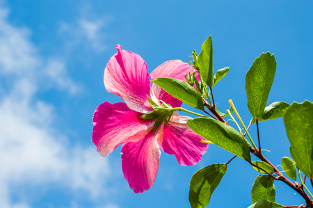 affirmation: Pretty Pink Hibiscus Affirmation