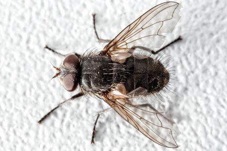 Pokój mucha strzał na obiektyw makro. Zdjęcie Seryjne