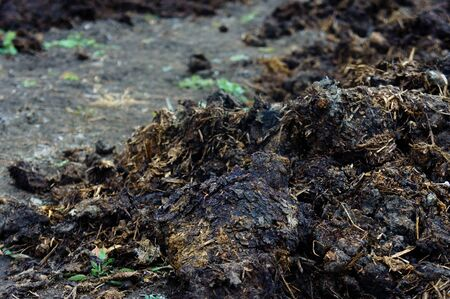 Pile of manure in the garden to fertilize the crop