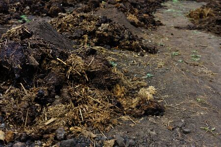 Piles of cow manure on the farm to fertilize the ground