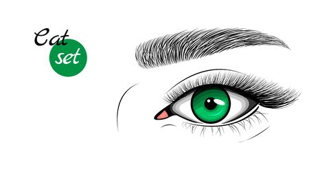 Vector icon of green female eye with extended eyelashes and eyebrow. Cat eye effect.