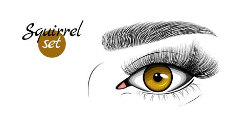 Vector illustration of brown female eye with extended eyelashes and eyebrow. Squirrel effect. Illustration
