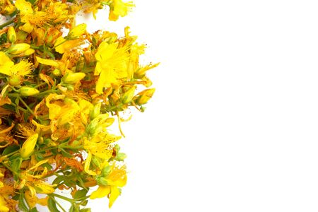 Yellow St. Johns wort flowers isolated on white background with copy space