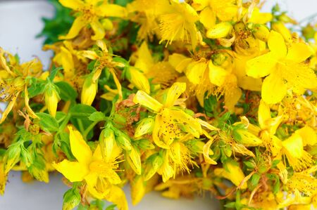 Background with yellow Saint Johns wort flowers for card, web banner