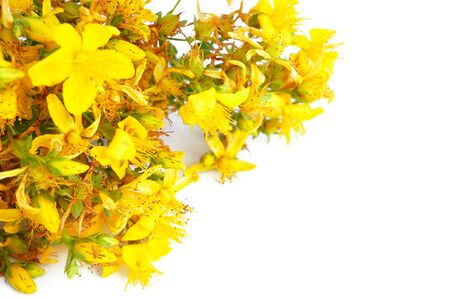 Yellow hypericum flowers isolated on white background with free space for text Banque d'images