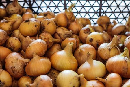 cebolla: Una pila de cebollas en el cuadro negro.