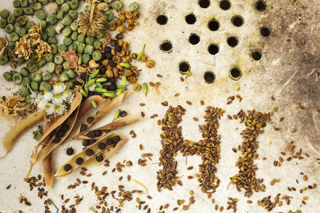 kinfolk: The surface of the old sink with seeds and peas. Text HI made from seeds