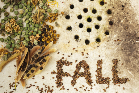 kinfolk: The background with the seeds on the surface of old sink: ecological products. The surface of the old sink with seeds and peas. Text FALL made from seeds Stock Photo