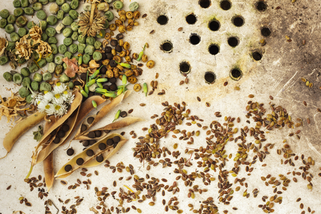 kinfolk: The background with the seeds on the surface of old sink: ecological products
